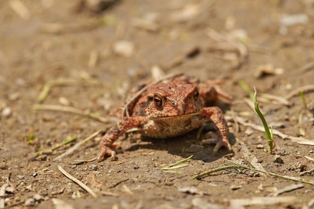 Царевна-лягушка )) Фотограф: VictorV  Просмотров: 295 Комментариев: 0