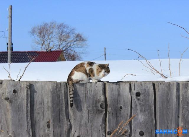 деревенский кот  Просмотров: 117 Комментариев: 0