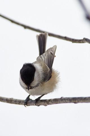 Борьба с ветром )) Фотограф: VictorV  Просмотров: 406 Комментариев: 0