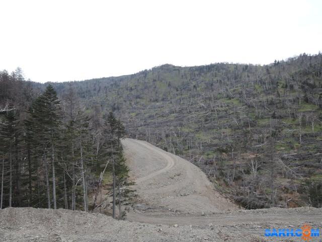 трасса по живому лесу вдоль края мёртвого леса.