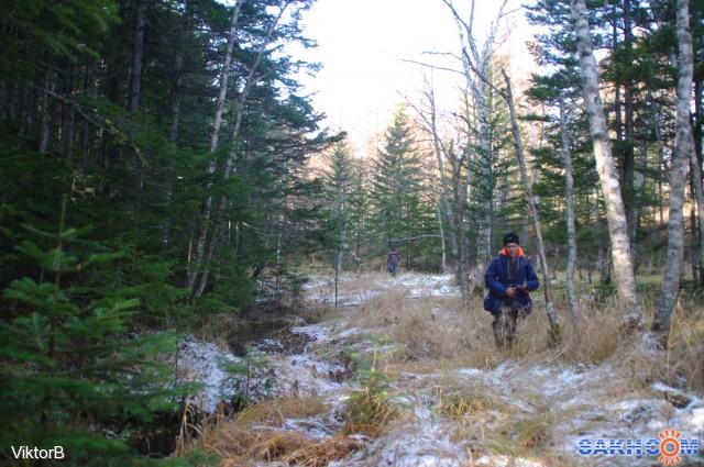 IMGP2748 Течет ручей в лесу! А я по лужку иду! 30.10.jpg сах