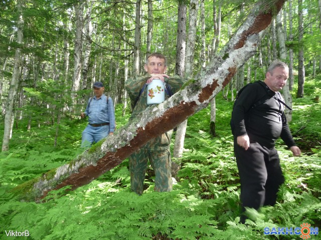 Поваленное дерево в лесу! Устал, склонился, я на ствол, чуть чуть! Фотограф: viktorb  Просмотров: 1152 Комментариев: 0