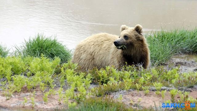 Медведь  Просмотров: 4098 Комментариев: 2