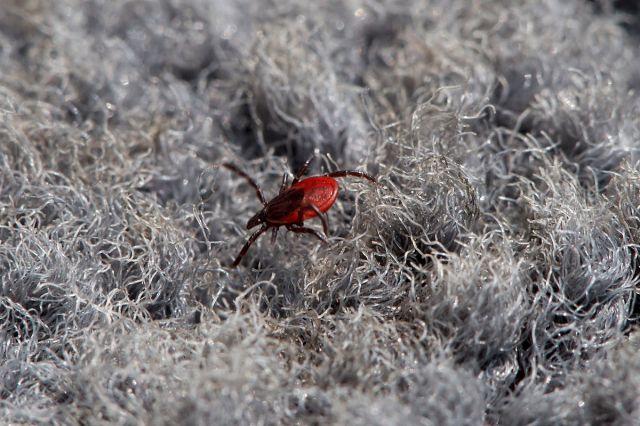 Любимое насекомое Сахалинцев ;( Фотограф: VictorV  Просмотров: 2520 Комментариев: 4