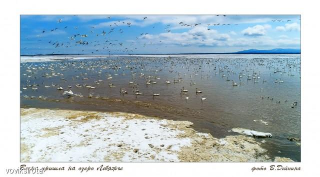 Пришла весна Фотограф: В.Дейкин  Просмотров: 320 Комментариев: 1