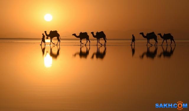 """""""Корабли"""" пустыни идут в тихую гавань на отдых"""