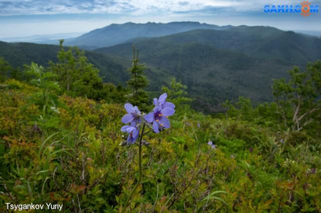 А на севере, на 1км- 2 таких цветка... Фотограф: Tsygankov Yuriy  Просмотров: 393 Комментариев: 2