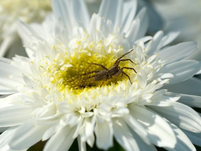 Хозяин цветочка :) Фотограф: VictorV  Просмотров: 1857 Комментариев: 0
