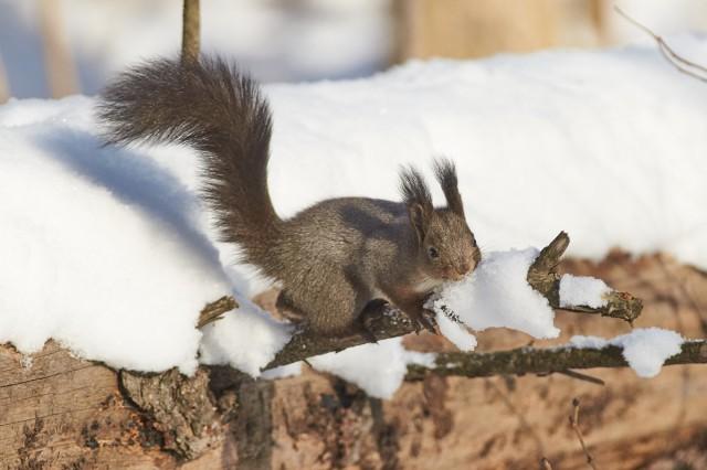 Снег, это та же вода )) Фотограф: VictorV  Просмотров: 158 Комментариев: 0