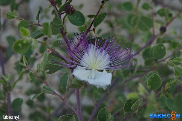 аленький цветок Фотограф: NIK  Просмотров: 303 Комментариев: 0