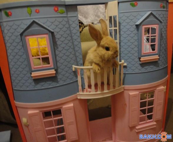 Игрушки своими руками для декоративных кроликов