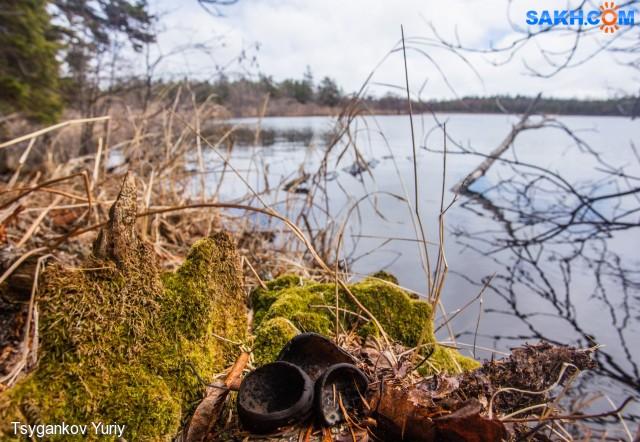 псевдоплектания черноватая Фотограф: Tsygankov Yuriy  Просмотров: 475 Комментариев: 0