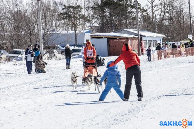 !!! Фотограф: Игорь Голубцов С фокусом промахнулся, но суть фото ясна,собачки могли и сбить...  Просмотров: 424 Комментариев: 1