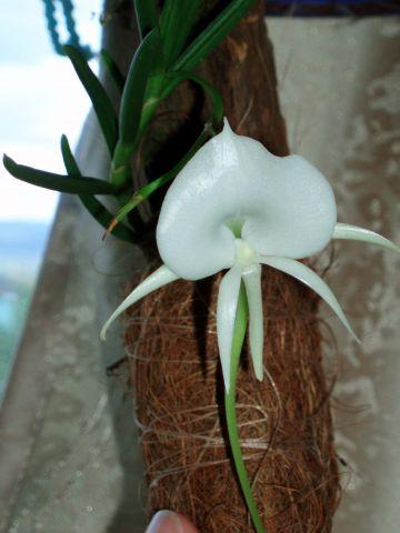Растения из Тюмени. Краткий обзор - Страница 3 Cfbf96a72e8370dbe70fecb1d8894077