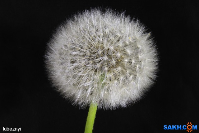 IMG_2159 Фотограф: NIK Готов противостоять ветру  Просмотров: 345 Комментариев: 0