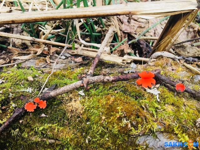 Ну а что?  То же прелесть - эти весенние грибочки... :)  Просмотров: 749 Комментариев: 0