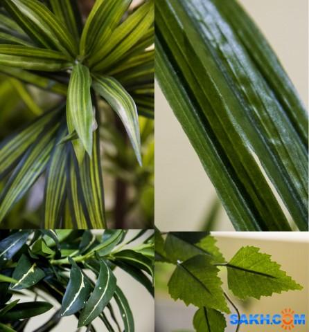 Наши искусственные растения.Заказ Фотограф: нат  Просмотров: 404 Комментариев: 0
