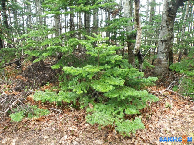 Туман в лесу  Просмотров: 353 Комментариев: 0