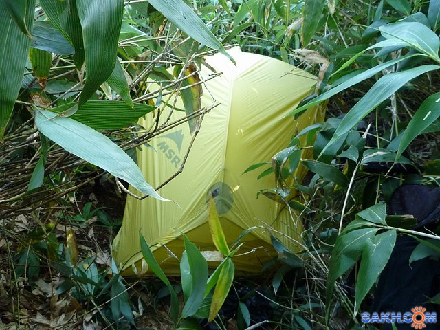 Ночёвка в бамбуке