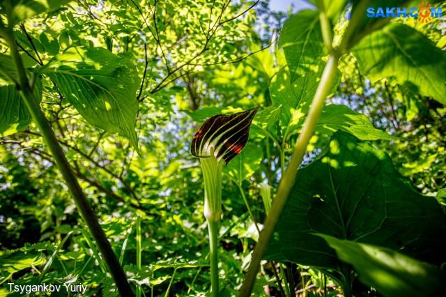вот такой капюшон! Фотограф: Tsygankov Yuriy Cobra-Lilies  Просмотров: 382 Комментариев: 0