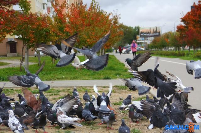 Голуби радуются Пришла женщина с целой сумкой корма для голубей. Они ее видимо знают - радовались, кружились, подлетали.  Просмотров: 320 Комментариев: 0