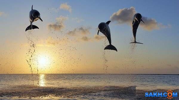 дельфины  Просмотров: 190 Комментариев: 0