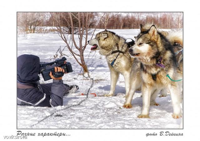 Разные характеры... Фотограф: В.Дейкин  Просмотров: 110 Комментариев: 1