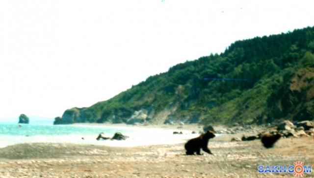 Убегающие медведи