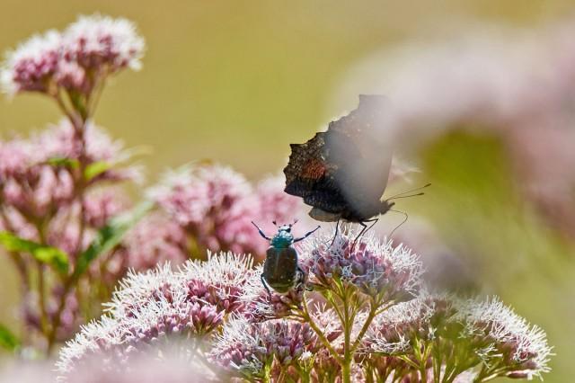 Эй ты, брысь с моего цветочка :))) Фотограф: VictorV  Просмотров: 69 Комментариев: 0