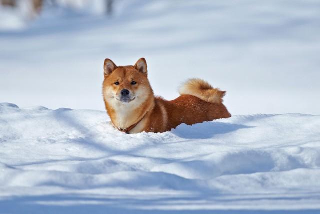 Почти снегоход )) Фотограф: VictorV  Просмотров: 977 Комментариев: 4