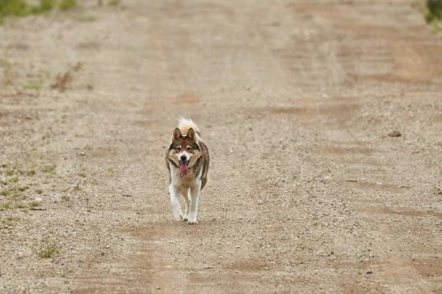 Гуляю сам по себе ) Фотограф: VictorV  Просмотров: 254 Комментариев: 1