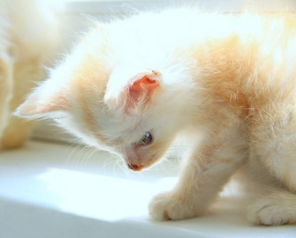 девочки, картинки котенок солнышко был