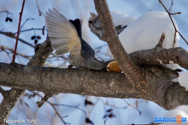 «Изящный грибоед» или «Едим красиво» :) Фотограф: Tsygankov Yuriy  Просмотров: 195 Комментариев: 0