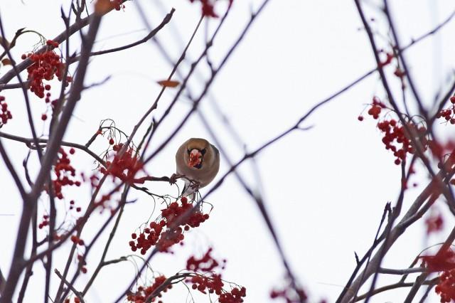 Вампирёныш ) Фотограф: VictorV  Просмотров: 307 Комментариев: 0
