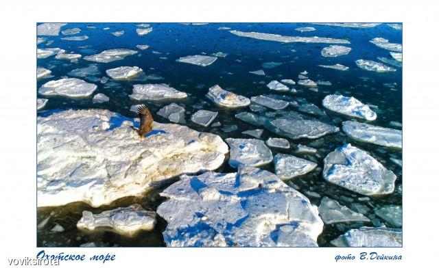 Охотское море Фотограф: В.Дейкин  Просмотров: 180 Комментариев: 1