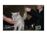 Название: Ivar Lilac Vernissage Фотоальбом: выставка кошек 29.11.2009 Категория: Животные  Время съемки/редактирования: 2009:11:29 16:46:46 Фотокамера: Canon - Canon EOS 1000D Диафрагма: f/5.0 Выдержка: 1/60 Фокусное расстояние: 44/1 Светочуствительность: 400   Просмотров: 455 Комментариев: 1