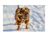 Название: На прогулке Фотоальбом: собаки Категория: Животные  Время съемки/редактирования: 2020:12:09 15:21:54 Фотокамера: Canon - Canon EOS 1200D Диафрагма: f/8.0 Выдержка: 1/250 Фокусное расстояние: 85/1    Просмотров: 266 Комментариев: 0
