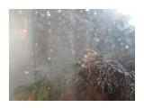 Название: 21 3 мая Фотоальбом: А из нашего окна... Категория: Природа Фотограф: Лузи  Время съемки/редактирования: 2013:05:03 01:04:53 Фотокамера: Canon - Canon PowerShot SX130 IS Диафрагма: f/3.4 Выдержка: 1/15 Фокусное расстояние: 5000/1000    Просмотров: 1265 Комментариев: 0