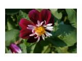 DSC03806 Фотограф: vikirin  Просмотров: 399 Комментариев: 0
