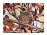 Название: DSC05750_н Фотоальбом: Птицы Категория: Животные  Время съемки/редактирования: 2021:10:18 09:45:14 Фотокамера: SONY - DSC-HX300 Диафрагма: f/6.3 Выдержка: 1/250 Фокусное расстояние: 21500/100    Просмотров: 45 Комментариев: 0
