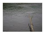 Название: белуха-2 Фотоальбом: Разное Категория: Природа  Время съемки/редактирования: 2007:07:07 21:24:03 Фотокамера: SONY - DSC-S700 Диафрагма: f/4.6 Выдержка: 1/400 Фокусное расстояние: 1508/100 Светочуствительность: 100   Просмотров: 1032 Комментариев: 0