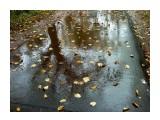 В дождь...  Просмотров: 2095 Комментариев: