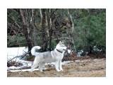 Название: DSC_0059 (59)m Фотоальбом: ATLANTERRA Siberians Категория: Животные  Время съемки/редактирования: 2011:04:23 14:13:02 Фотокамера: NIKON CORPORATION - NIKON D90 Диафрагма: f/5.6 Выдержка: 10/5000 Фокусное расстояние: 1050/10 Светочуствительность: 800   Просмотров: 969 Комментариев: 0
