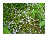 Цветут цветы, не трож их, береги! Фотограф: viktorb о. СахалинЮ р. Минеральная!  Просмотров: 1258 Комментариев: 0