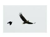 охотник Фотограф: ©  marka /печать больших фотографий,создание слайд-шоу на DVD/  Просмотров: 612 Комментариев: 0