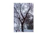 В снегу.. Фотограф: vikirin  Просмотров: 2532 Комментариев: 0