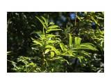 Еще зеленая осень Фотограф: vikirin  Просмотров: 1284 Комментариев: 0