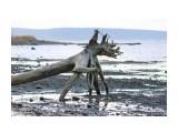 Прогулки по берегу моря. Фотограф: 7388PetVladVik  Просмотров: 1592 Комментариев: 2