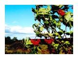 P9040081 Фотограф: фотохроник  Просмотров: 390 Комментариев: 0