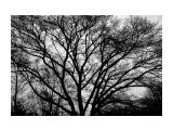 Название: дерево там... такое... Фотоальбом: Природа Категория: Природа Фотограф: _sanek_  Просмотров: 1450 Комментариев: 0